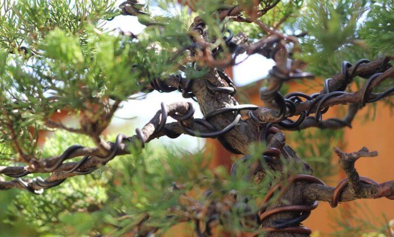 Photo of Merchant Stories: Eastern Leaf